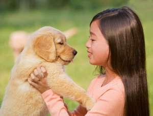 看看你家狗粮中有抗氧化剂吗